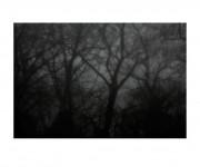 Sin título. De la serie Bosque Real / Bosque Fingido, 2012. Juan Millás.