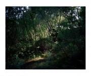 Sin título. De la serie Parece posible encontrar todavía algo por descubrir en el jardín, 2010. Juan Millás.
