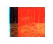 Sin título. De la serie Bosque real / bosque fingido, 2011. Juan Millás.